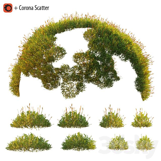 Forest Moss 2
