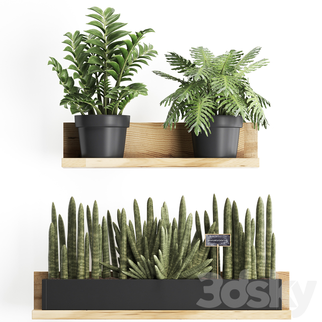 Collection of plants 401.