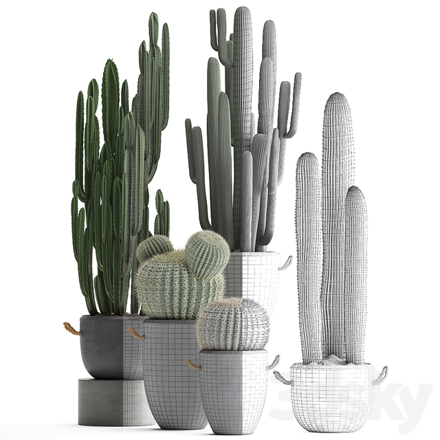 Collection of plants 411. Cactus set.