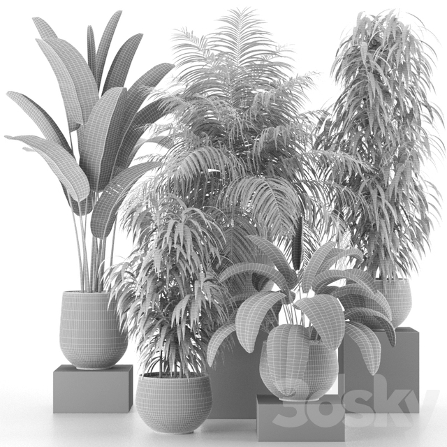 Houseplant Collection 04