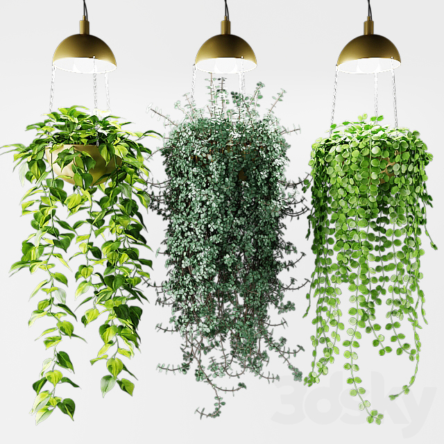 Ampel plants in a cache-pot with lamps