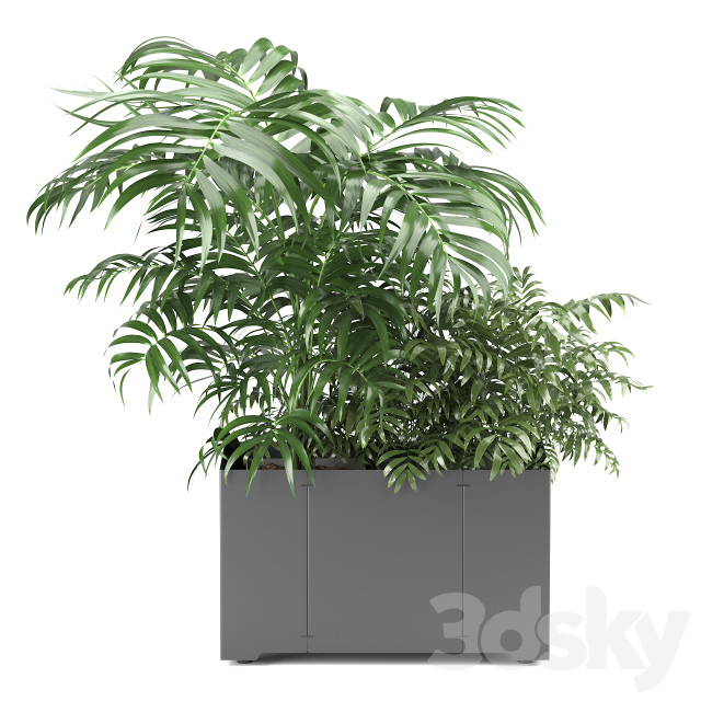Palm tree in a pot 02 (CAPE Collection)