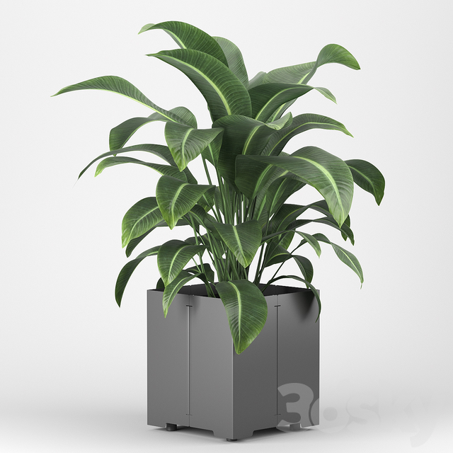 Plant in a pot 05 (CAPE Collection)