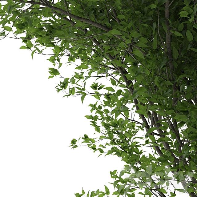 tree 53
