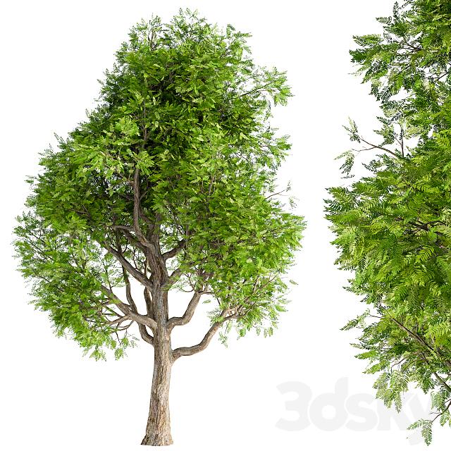 Japanese tree green