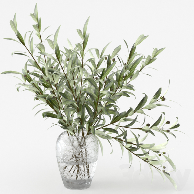 Olive branches in a vase