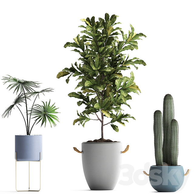 Plant Collection 439.