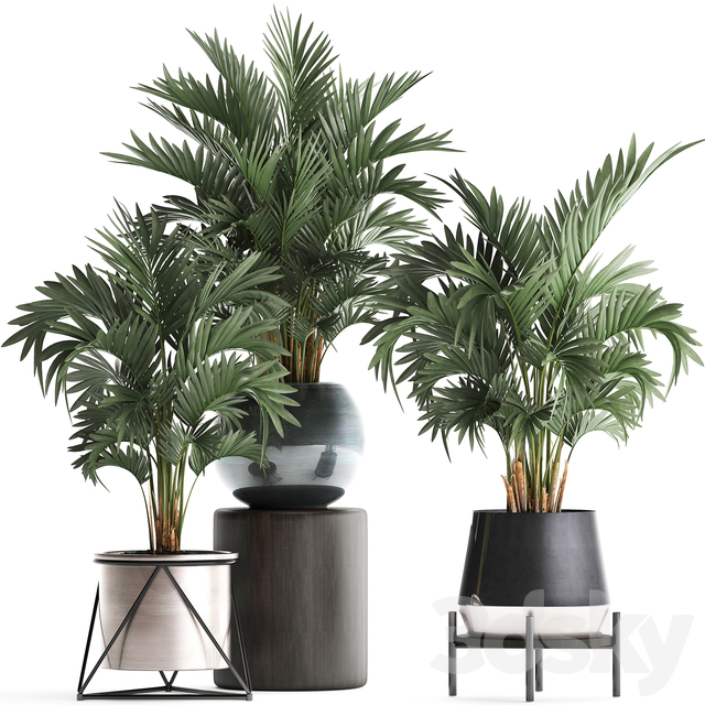 Plant Collection 442.