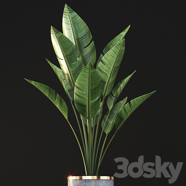plant_004