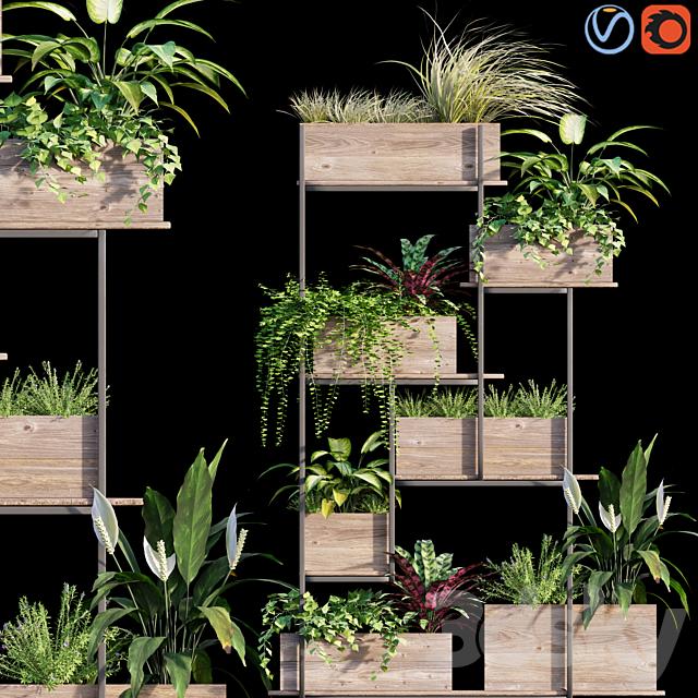 Plant set # 12