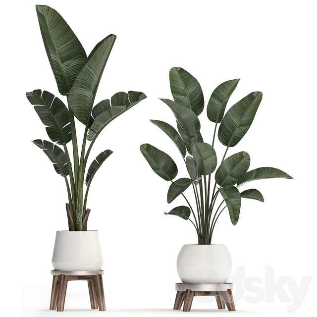 Plant Collection 461.