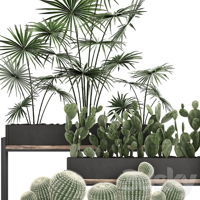 Plant Collection 462.