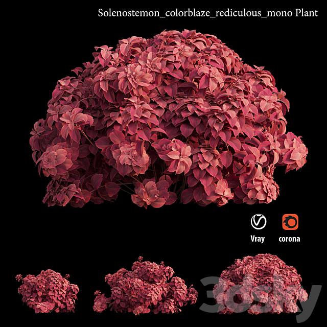 solenostemon_colorblaze_rediculous_mono Plant