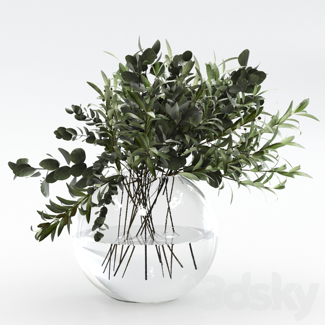 Bouquet of olives and eucalyptus