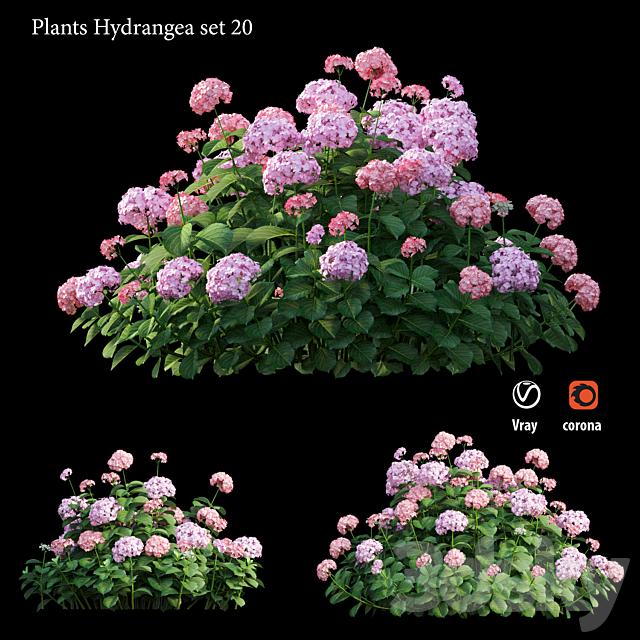 Plants Hydrangea set 20