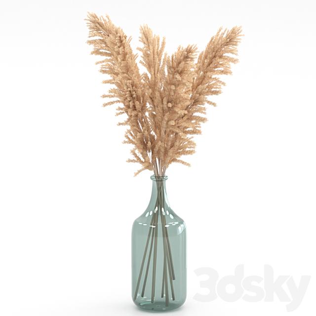 Bouquet of pampas grass