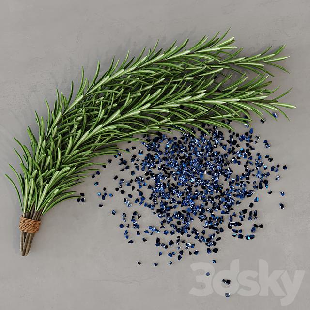 Rosemary plants set