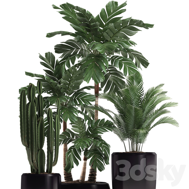 Plant Collection 472.
