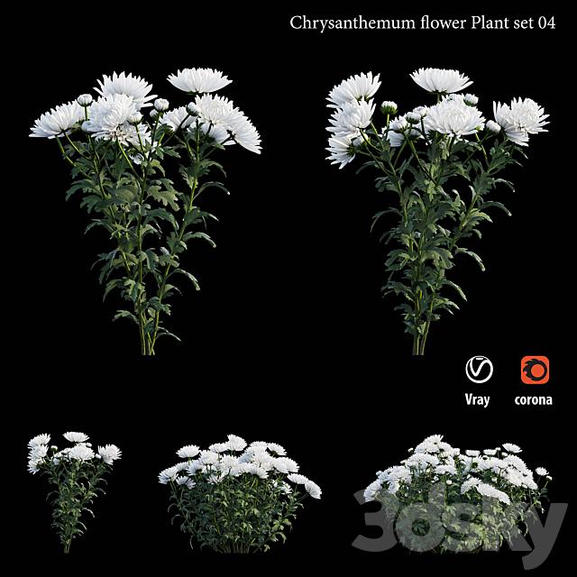 Chrysanthemum flower plant set 04