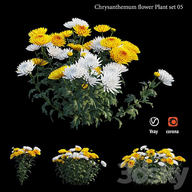 Chrysanthemum flower plant set 05