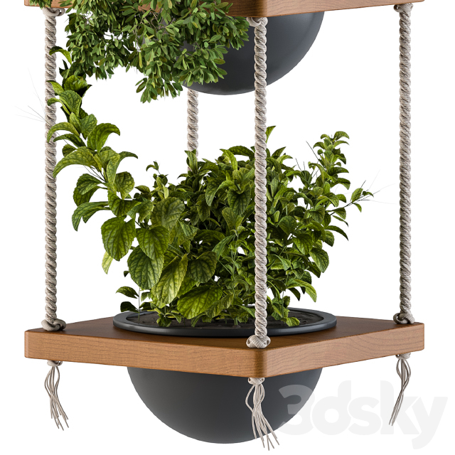 Hanging Plants Rope and Wood