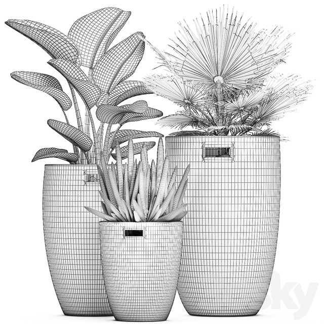 Collection of plants 480.