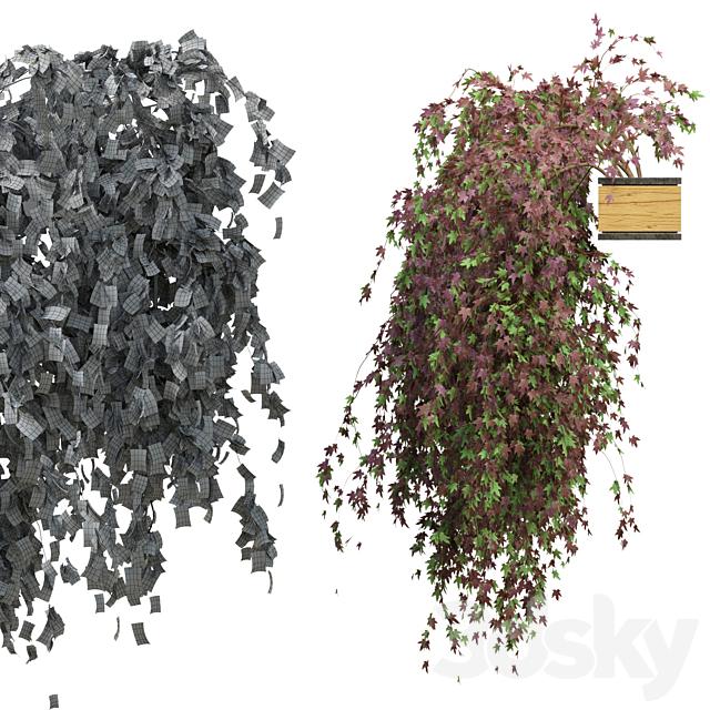 Hanging plant_2