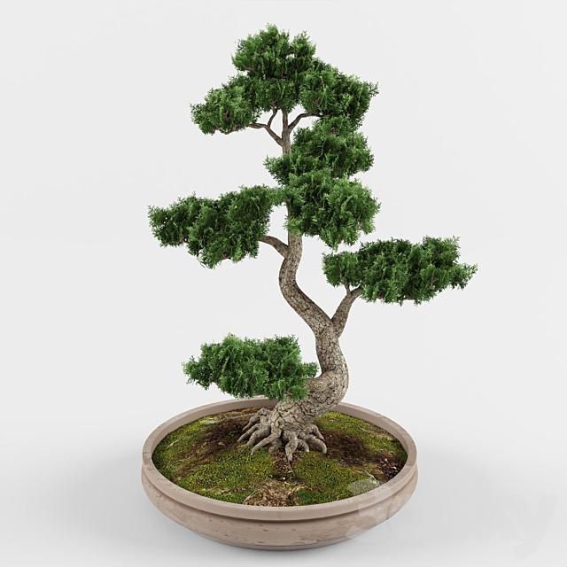 Bonsai decorative tree 01