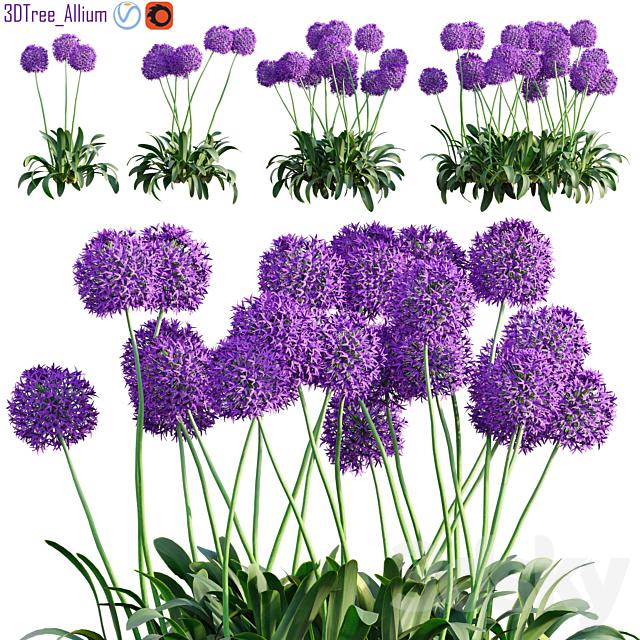 Allium globemaster 01