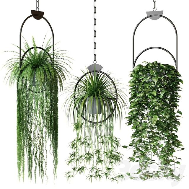 Set of hanging plants in hanging planters 2