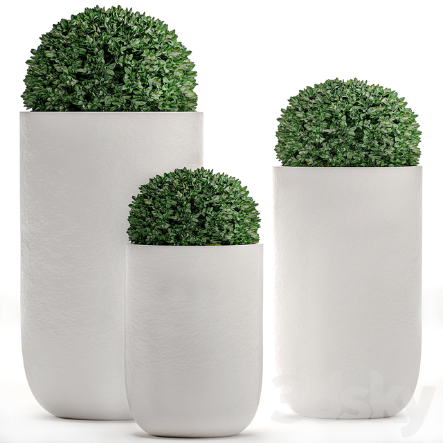 Plant Collection 499.