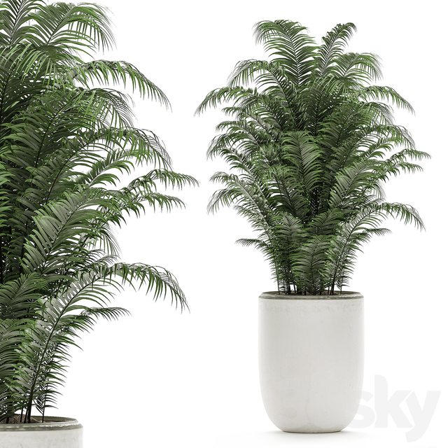 Plant Collection 504.