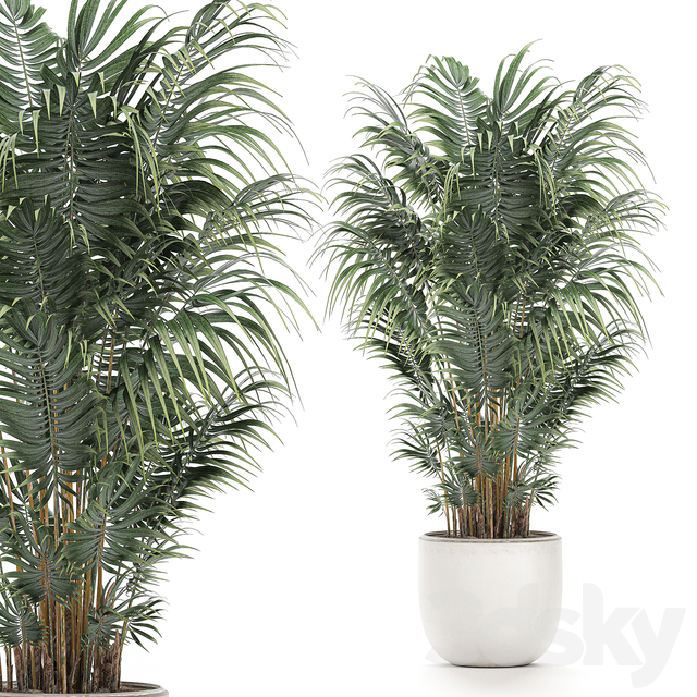 Collection of plants 520.