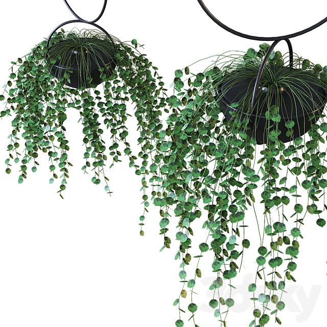 Hanging plant pot / BLUMENKUGEL EDITION