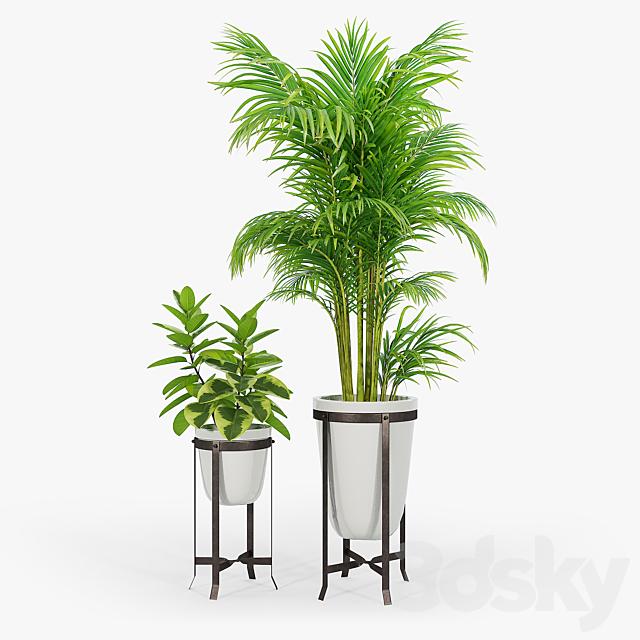 amir planters