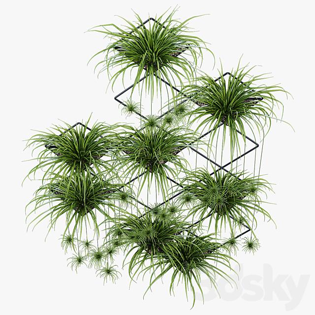 Ikebana one