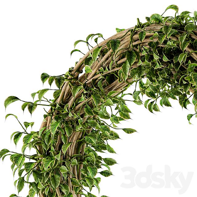 Wall Plants Decor Krans
