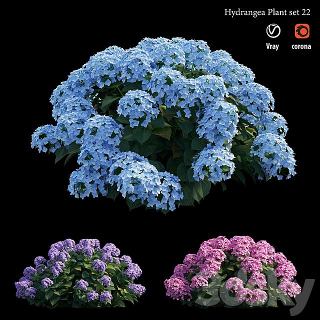 Hydrangea Plant set 22