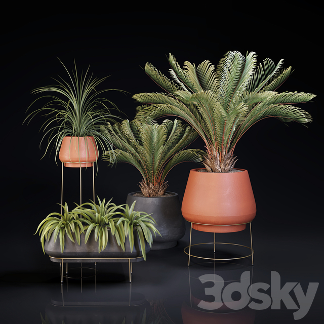 Plants collection 01