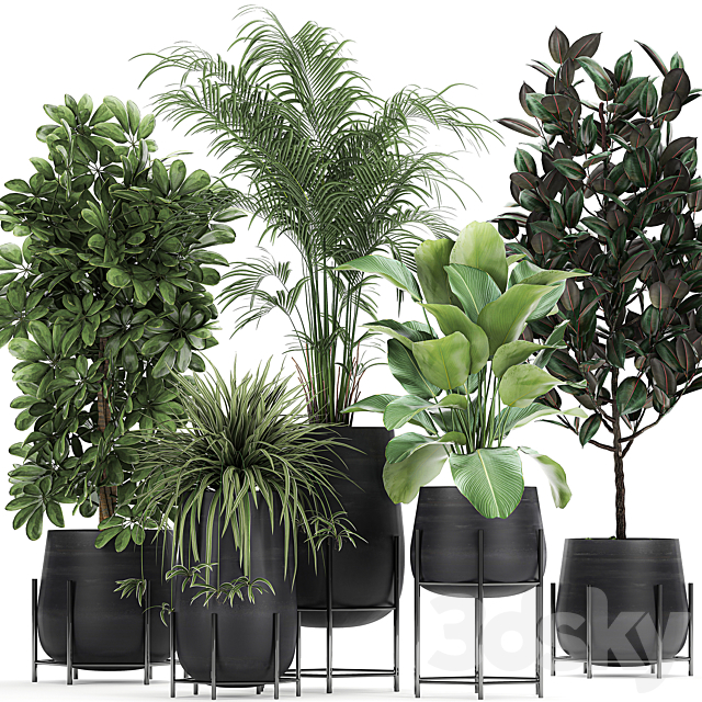 Plant collection 769.