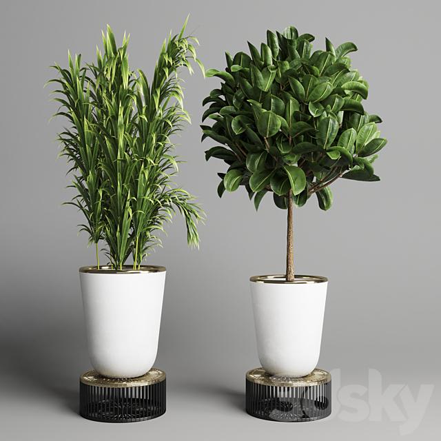 collection Indoor plant 35 -concrete vase