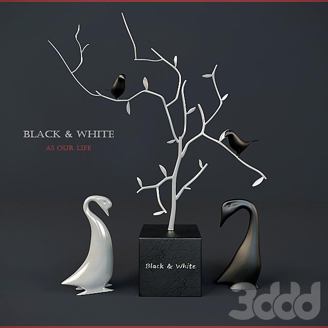Black & White birds