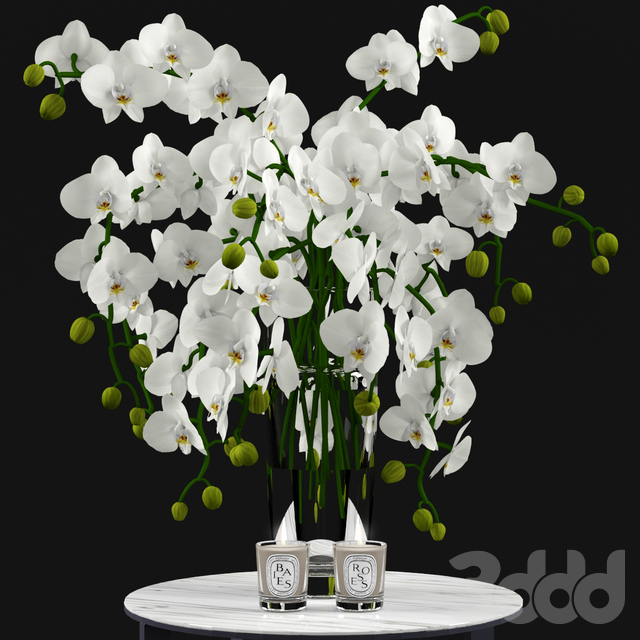 White Orchids and Candles