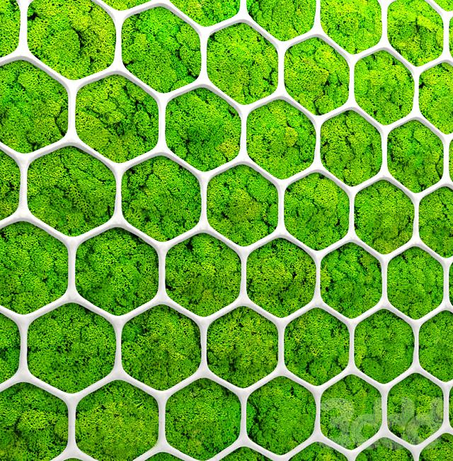 Стабилизированный мох. Панель