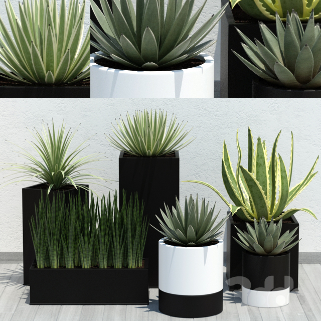 Aloe Pack