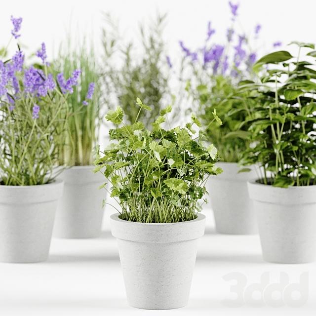 Herbs in concrete pots