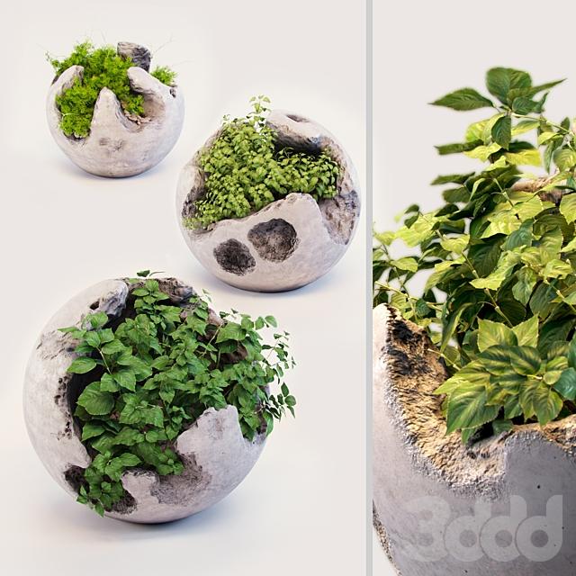 Круглые бетонные горшки с растениями