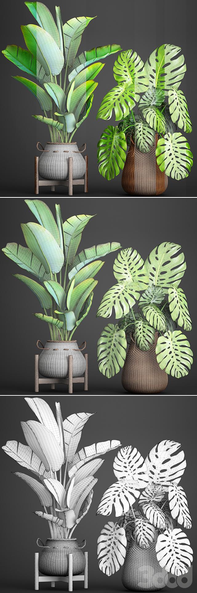 Коллекция растений 94.