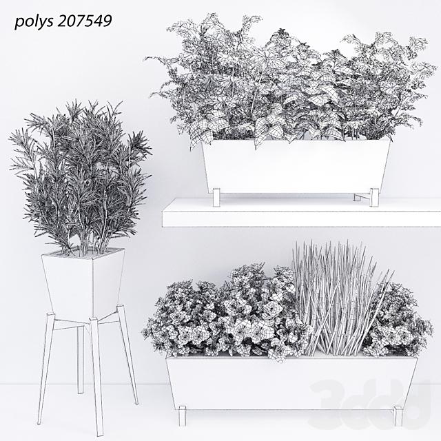 Пряные травы для кухни в керамических кашпо