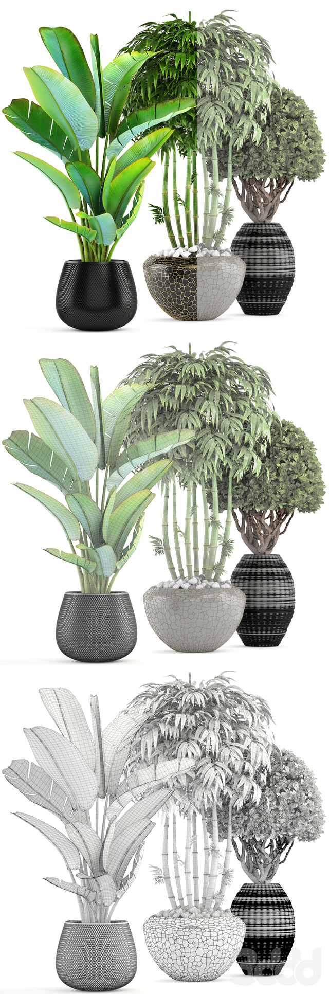 Коллекция растений 137.